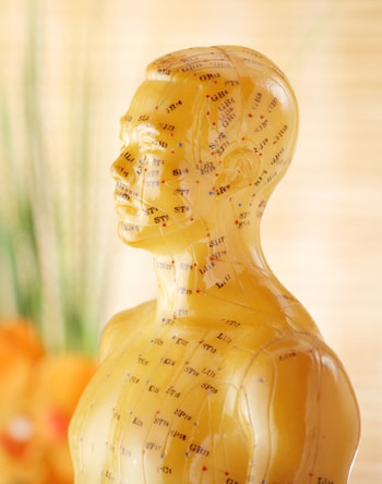 acupuncture_model2